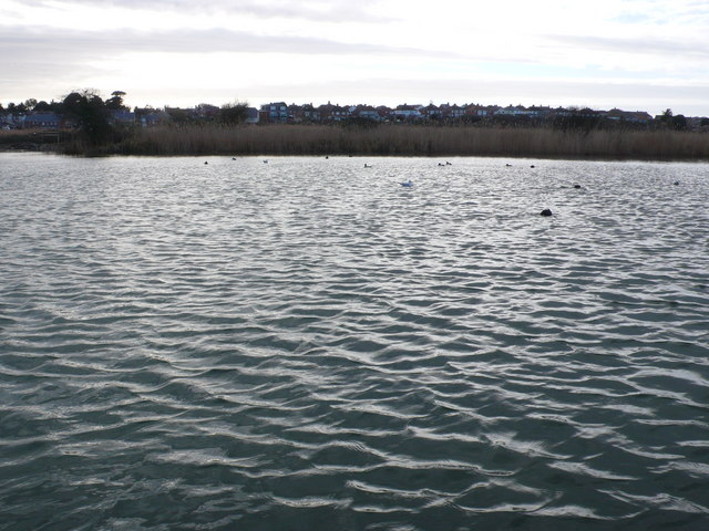 Radipole Lake, Weymouth
