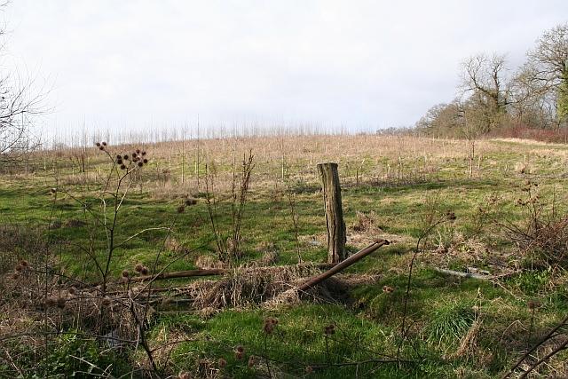 Young Plantation