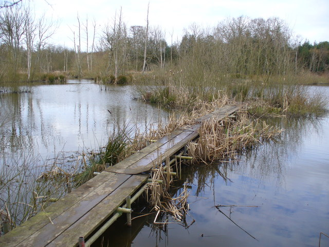 Jetty on Pond, by Slaugham