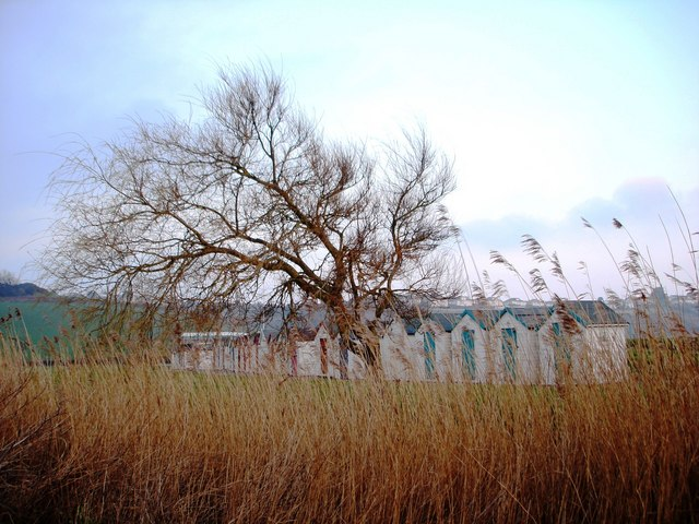 Broadsands beach - reedy grass, twisted tree and beach huts