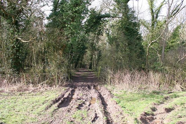 Track into Berrow Wood