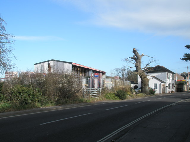 Severely pollarded tree in Station Road