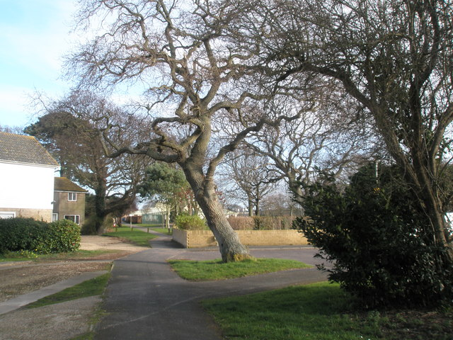 Mature tree on edge of Hayling Park