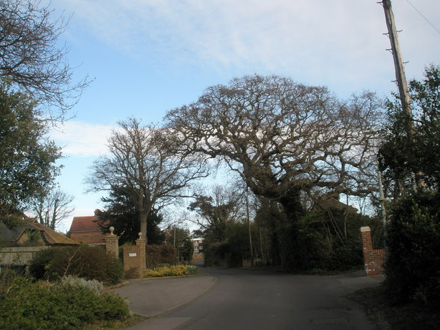 Lovely tree in Bacon Lane