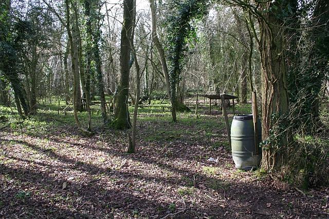 Berrow Wood