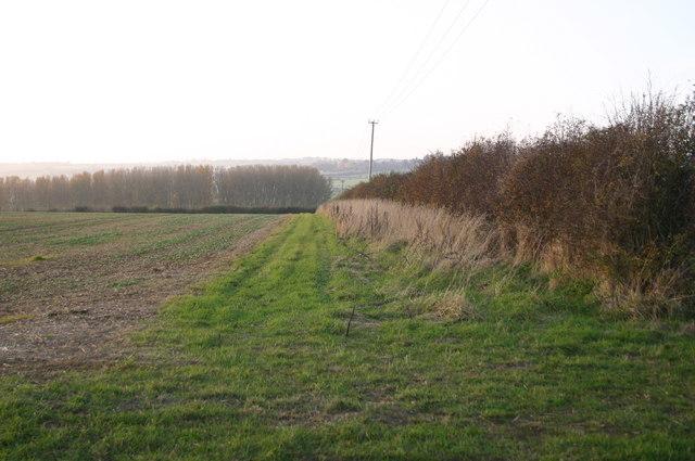 Hedge near Windmill Hill