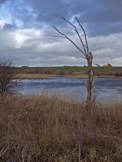 Pond near Welton Water