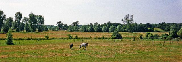 Farmland with Ponies, Wangford, Suffolk