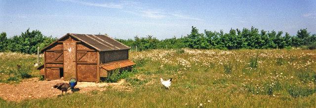 Farmland with Chickens, Wangford, Suffolk