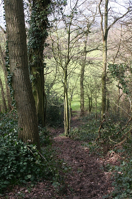 Path Down Through Berrow Wood