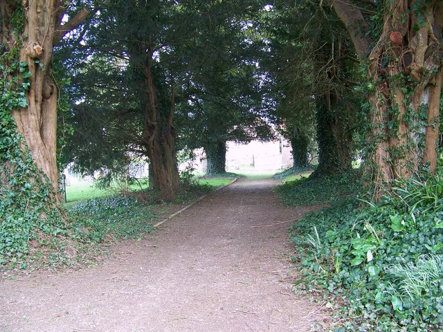 Yew trees, Parish Church of St Mary, Winterborne Whitechurch
