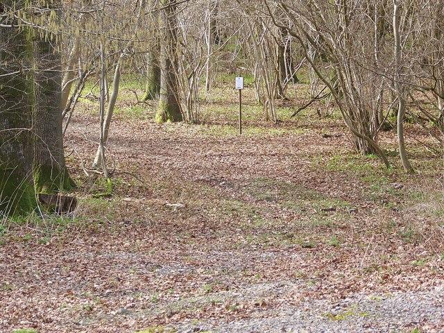 Woodland glade, Garston Wood