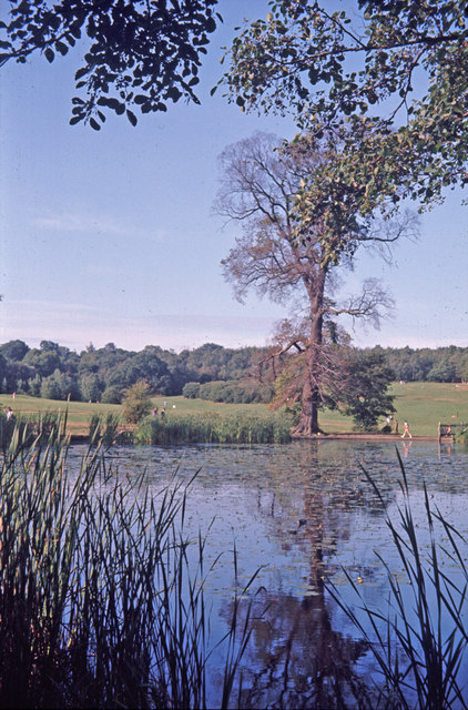 Lake at Trent Country Park, London N14 with Elm Tree