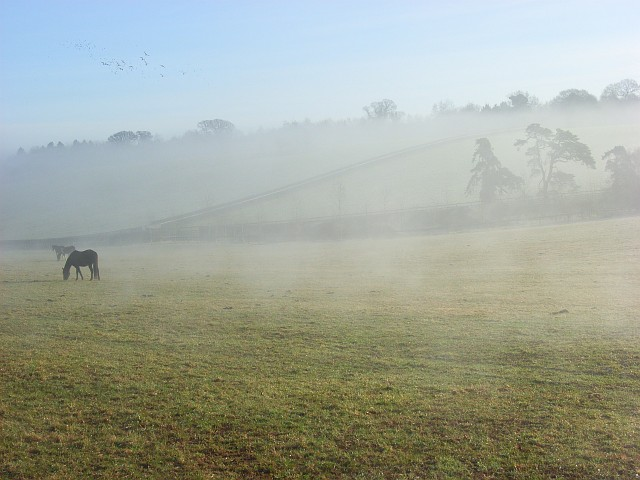 Horses in mist below Cockpole Green