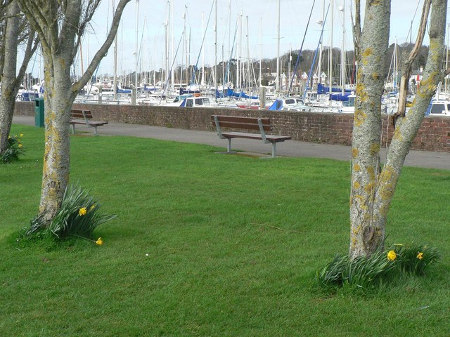 Lymington: trees, daffodils and yachts