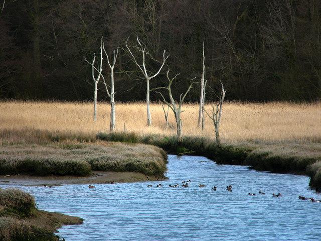 Dead trees, Bunny Meadows, Warsash