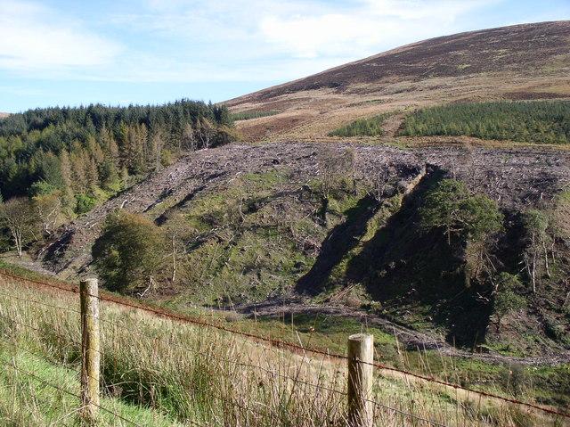Tree Clearing Milljoan