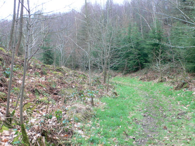 Footpath to Garth through Tower Wood