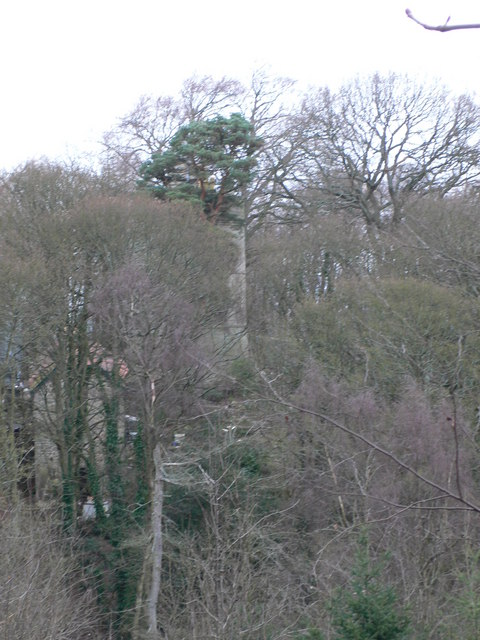 Tower Wood