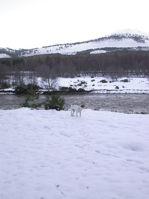 River Feshie in snow