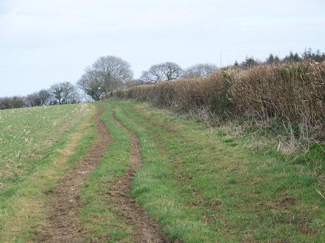 Bridleway toward Whatcombe Wood