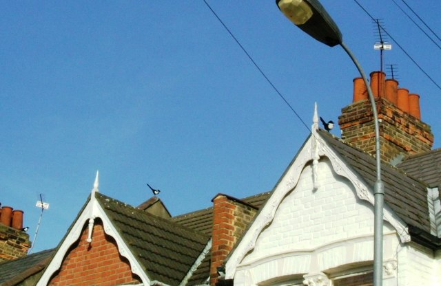 Magpies in Dunraven Road, W12