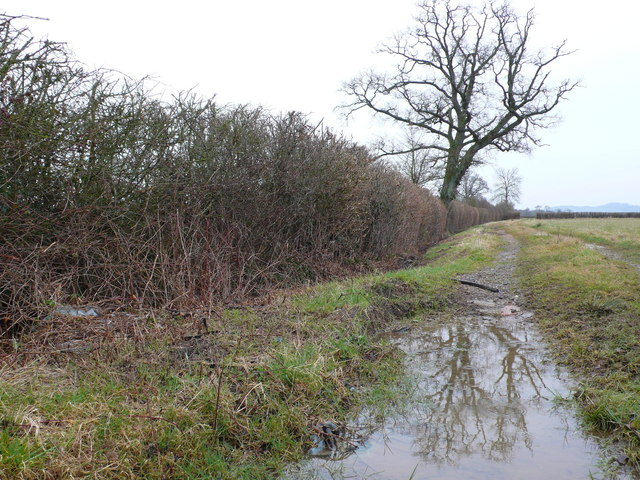Hedge, tree and puddle