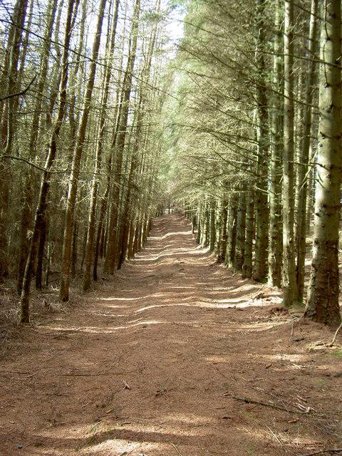 Short-Cut Footpath through the Clwyd Forest.