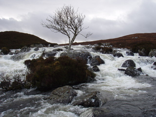 Tree in the River Gruinard