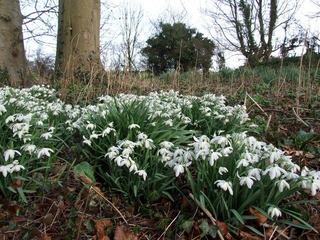Wild flowers, Hareby
