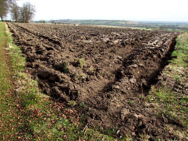 Farmland, Hareby