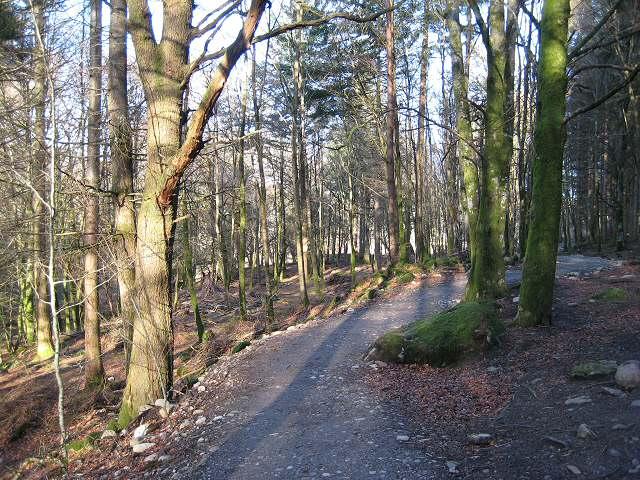 The Braan walk