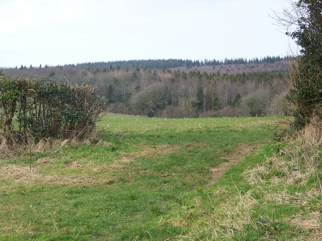 View towards Whatcombe Wood