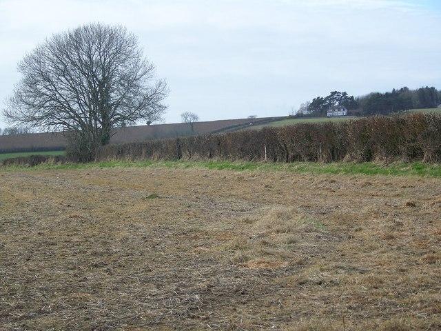 Hedge near Whatcombe Wood