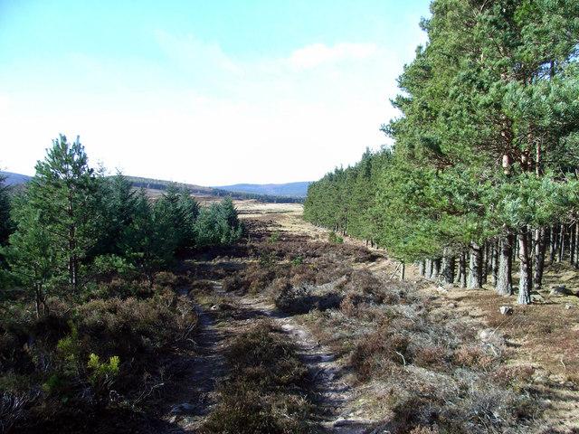 Cuttie's Wood