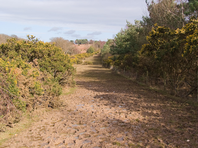 Elevated muddy track next to A31 at Ocknell, New Forest