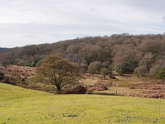 Grass and heathland looking towards Ocknell Inclosure, New Forest