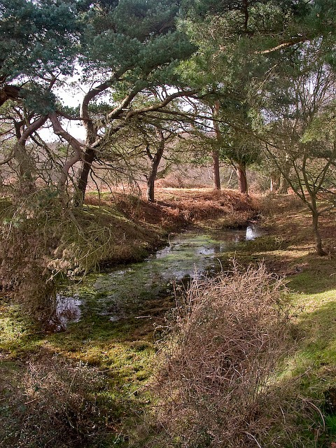 Pond within trees on Stoney Cross Plain, New Forest