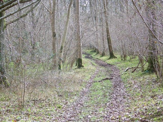 Footpath, Knighton Wood
