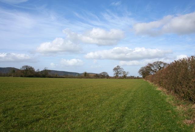 Pasture with view towards Peckforton Hills
