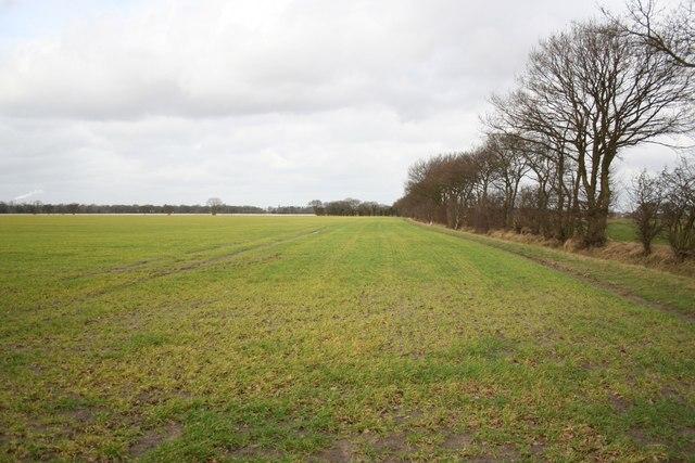 Footpath to Plot Farm