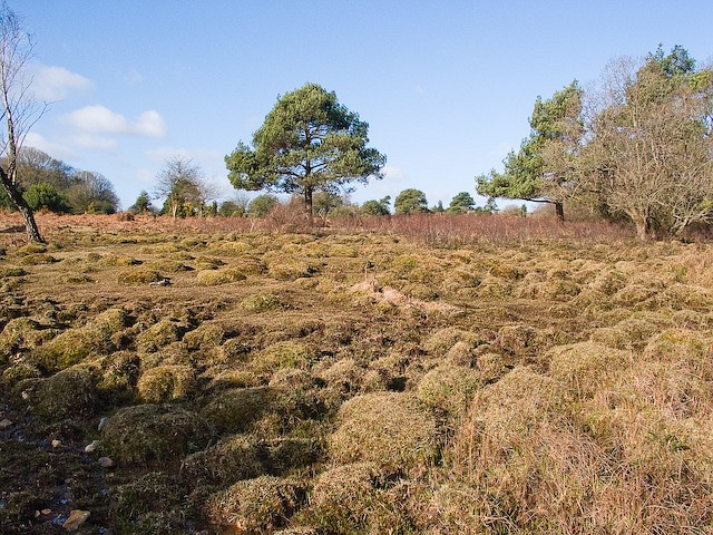 Hummock-scape between Ocknell Inclosure and Winding Stonard, New Forest