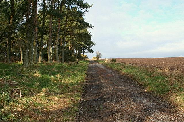 Lane to the Gordonstoun Lookout Tower