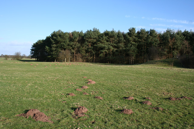 View towards Coronation Wood