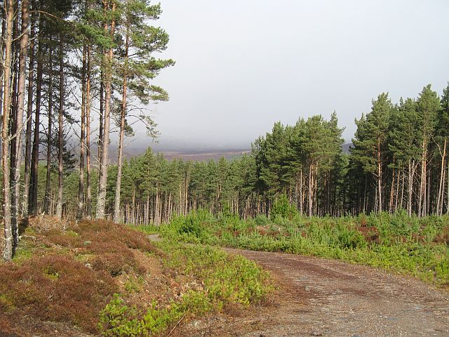 Inveruglas Forest
