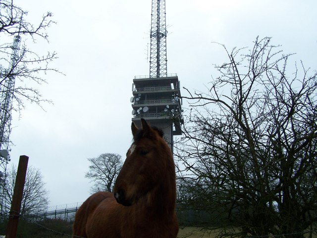 Turners Hill Mast
