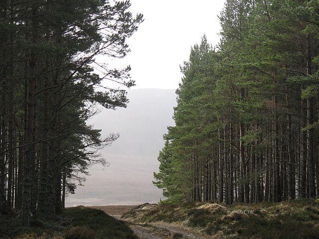 Forest edge, Maol a' Ghiubhais