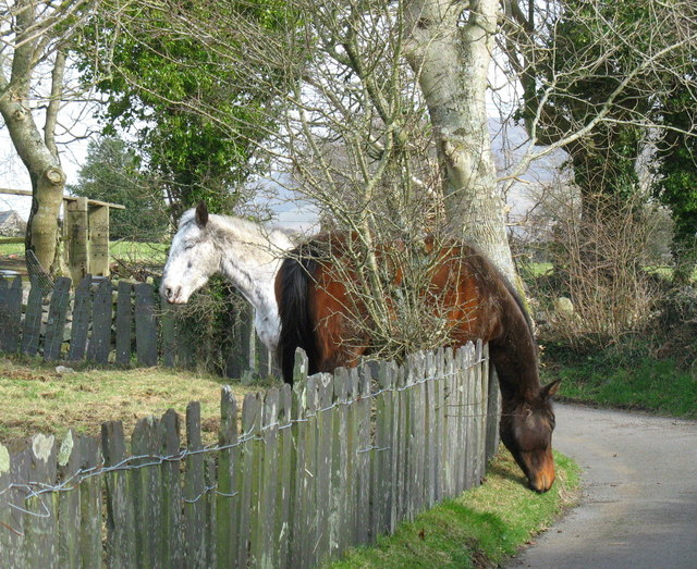 The grass is always greener on the other side - horses on Cae Hywel hill