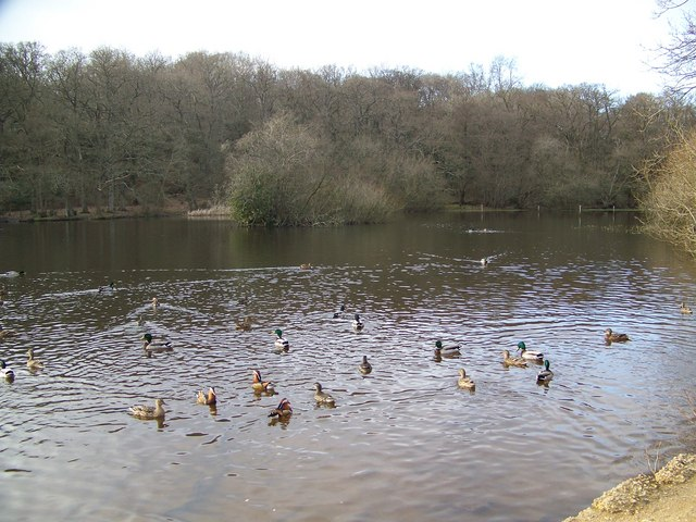 Ducks on Eyeworth Pond