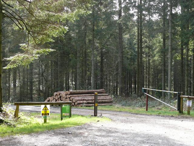 Mynedfa Fforest / Forest Entrance